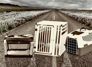 Verschiedene Hundeboxen
