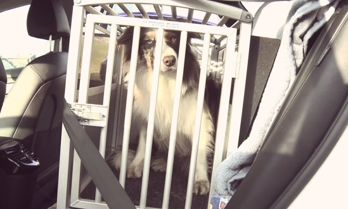 Test: Hundeboxen