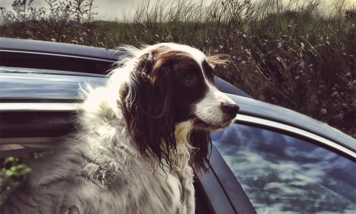 entspannt mit dem hund im auto am ziel ankommen hundebox. Black Bedroom Furniture Sets. Home Design Ideas