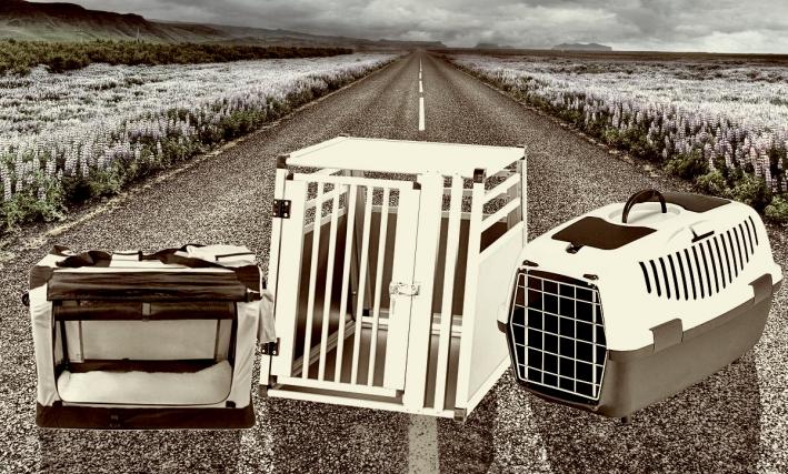 Die beste Hundetransportbox für meinen Hund | Hundebox Test ✓