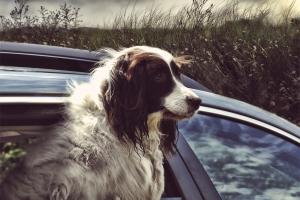 Entspannt im Auto mit Hund